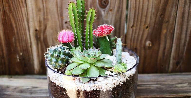 kaktus-featuredi